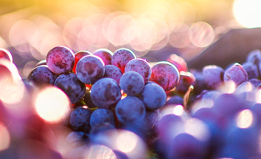 BigDataGrapes – Big Data to enable global disruption of the grapevine-powered industries